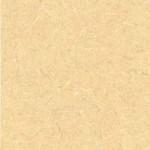Saffron_Tigris_4673-60