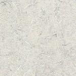 White_Tigris_4783